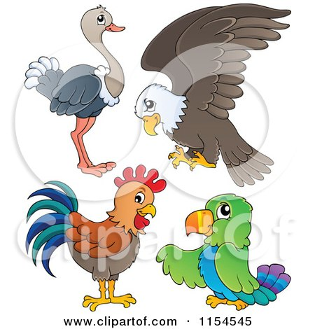 Cartoon of an Ostrich Bald Eagle Chicken and Parrot - Royalty Free Vector Clipart by visekart