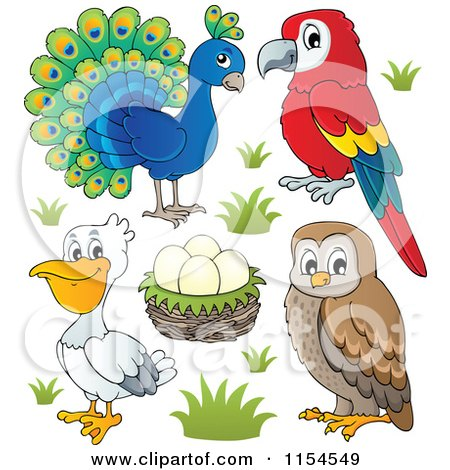 Cartoon of a Peacock Parrot Nest with Eggs Pelican and Owl - Royalty Free Vector Clipart by visekart