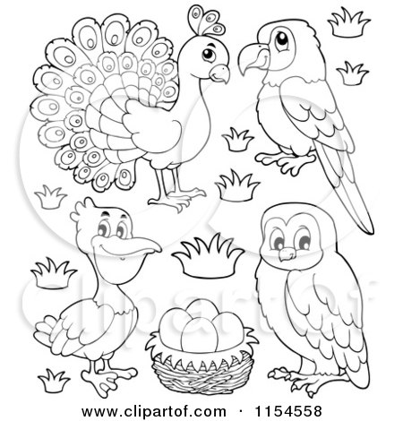 Cartoon of an Outlined Peacock Parrot Pelican Eggs and Owl - Royalty Free Vector Clipart by visekart