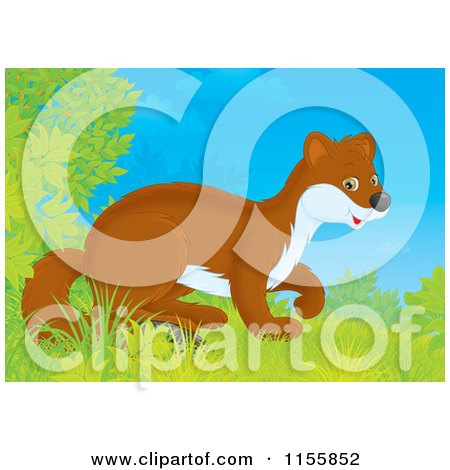 Cartoon of a Cute Weasel Emerging from Shrubs - Royalty Free Illustration by Alex Bannykh