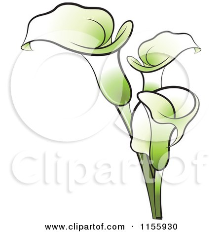 Clipart of Green Calla Lily Flowers - Royalty Free Vector ...