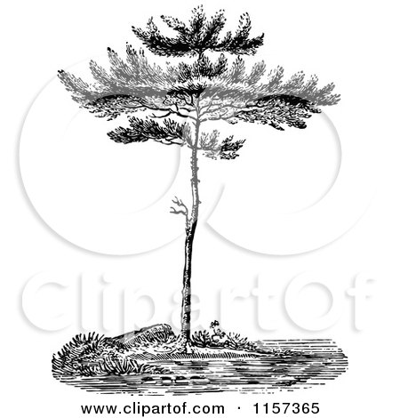 Clipart of a Retro Vintage Black and White Pine Tree - Royalty Free Vector Illustration by Prawny Vintage