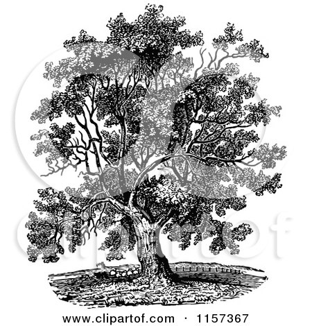 Clipart of a Vintage Black and White Tree - Royalty Free Vector ...
