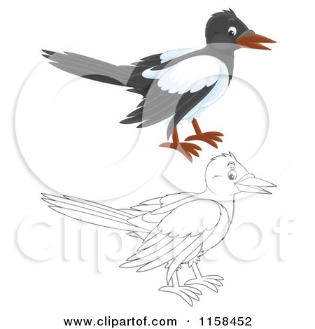 Cartoon of a Colored and Outlined Magpie - Royalty Free Illustration by Alex Bannykh