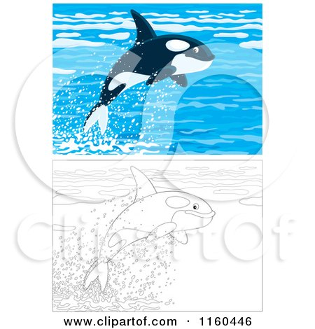 Cartoon of Cute Outlined and Colored Orca Whales Leaping out of Water - Royalty Free Vector Clipart by Alex Bannykh