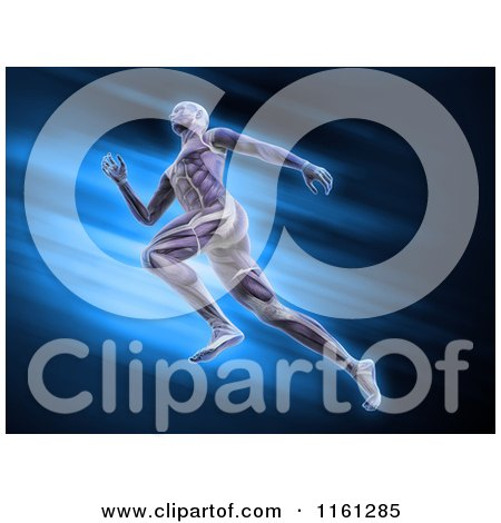 Clipart of 3d Muscular Anatomy of a Runner over Blue - Royalty Free CGI Illustration by Mopic