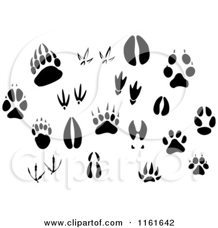 Animal foot prints further Clipart4 together with Clipart4 moreover 090331 201954 919048 in addition Mammal Tracks. on deer feet clip art