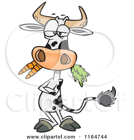 Cartoon of a Cow with Folded Arms, Munching on Carrots - Royalty Free Vector Clipart by toonaday