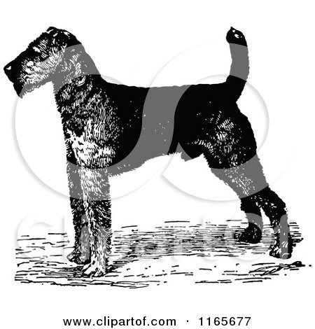 airedale terrier dogs head in profile facing to the left