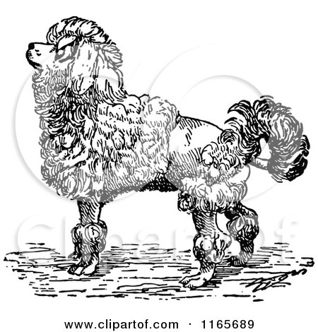 Clipart of a Retro Vintage Black and White Groomed Poodle Dog - Royalty Free Vector Illustration by Prawny Vintage