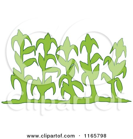 Royalty-Free (RF) Corn Stalk Clipart, Illustrations, Vector ...