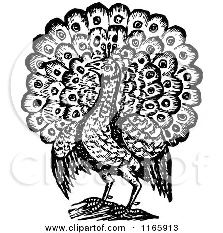 Clipart of a Retro Vintage Black and White Peacock Bird 2 - Royalty Free Vector Illustration by Prawny Vintage