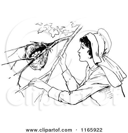 Clipart of a Retro Vintage Black and White Woman Looking at a Bird Nest - Royalty Free Vector Illustration by Prawny Vintage