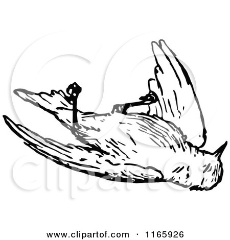 Royalty-Free (RF) Clipart of Dead Birds, Illustrations, Vector ...