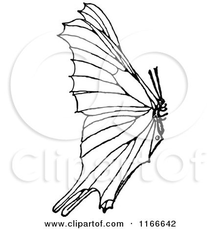 Clipart of a Retro Vintage Black and White Butterfly over Milkweed    Vintage Butterfly Black And White