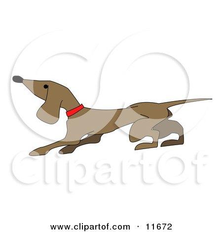 Cute Little Dachshund Dog Posters, Art Prints