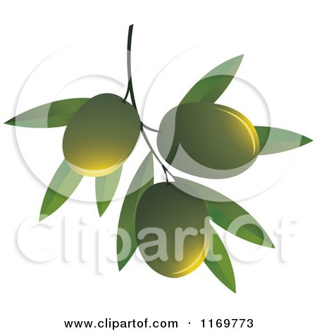 Clipart of Green Olives on a Branch - Royalty Free Vector Illustration by Lal Perera