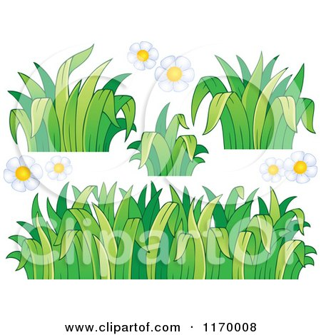 Cartoon of White Daisy Flowers and Grss - Royalty Free Vector Clipart by visekart