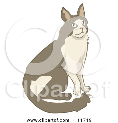 Brown and Tan Cat Clipart Illustration by AtStockIllustration