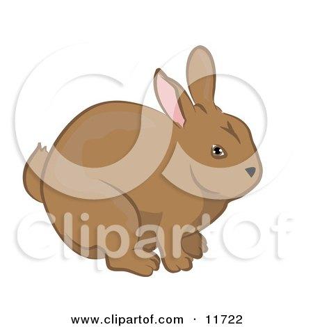 Cute Brown Bunny Rabbit Clipart Illustration by AtStockIllustration