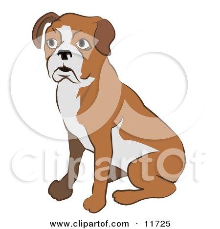 Cute Boxer Dog Sitting Clipart Illustration by AtStockIllustration