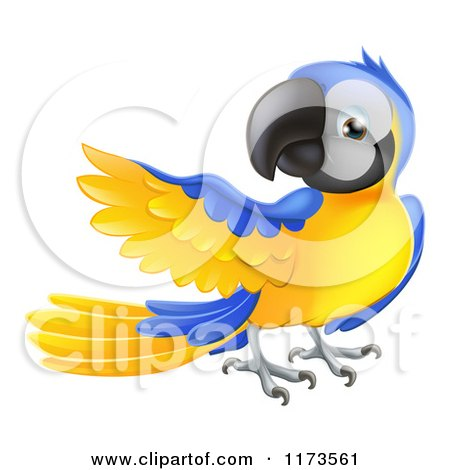 Cartoon of a Blue and Yellow Parrot Presenting - Royalty Free Vector Clipart by AtStockIllustration