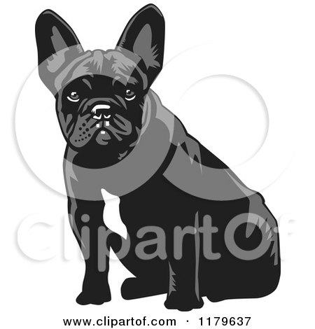 Cartoon of a Sitting Black and White French Bulldog - Royalty Free Vector Clipart by David Rey