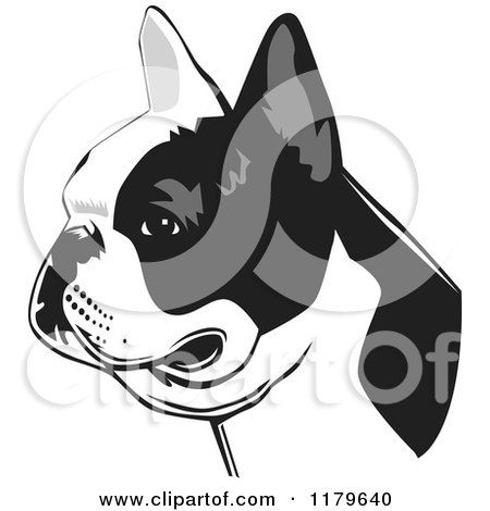 Cartoon of a Black and White French Bulldog Face in Profile - Royalty Free Vector Clipart by David Rey