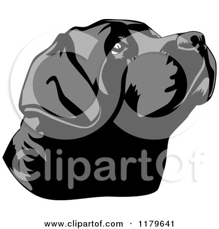 Cartoon Of A Black Lab Dog Face Tilted Up Royalty Free