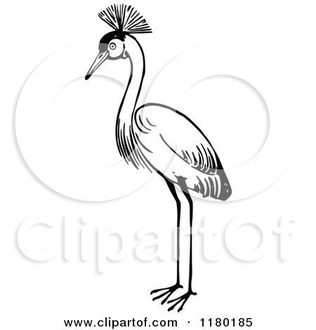 Clipart of a Black and White Crested Crane Bird - Royalty Free Vector Illustration by Prawny Vintage