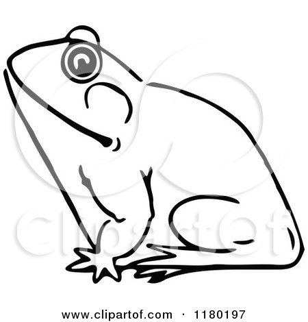 Frog Sketch Drawing And White Sketched Frog