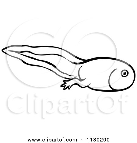 clipart of a black and white sketched tadpole 2 royalty