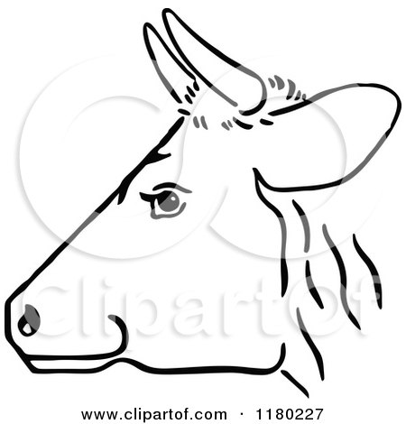 Profile of cow head stock photo. Image of looking ... |Dairy Cow Head Profile