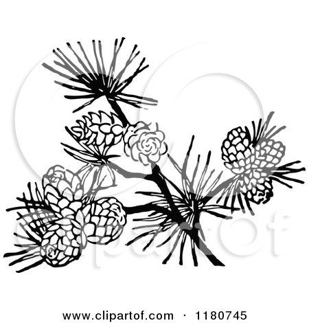 Clipart of a Retro Vintage Black and White Branch with Pinecones - Royalty Free Vector Illustration by Prawny Vintage