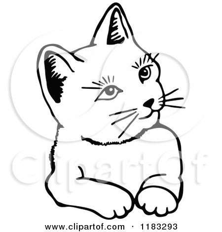 Clipart Of A Black And White Cat 2