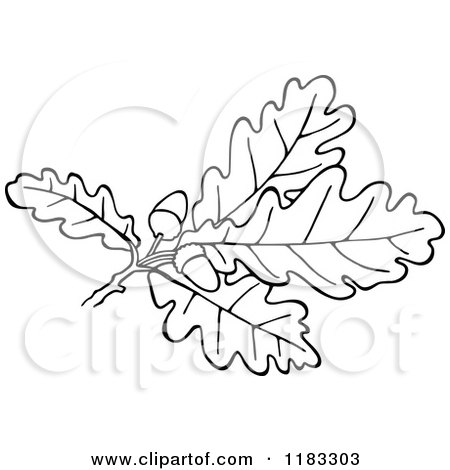 Clipart Of A Black And White Oak Branch With Leaves And Acorns