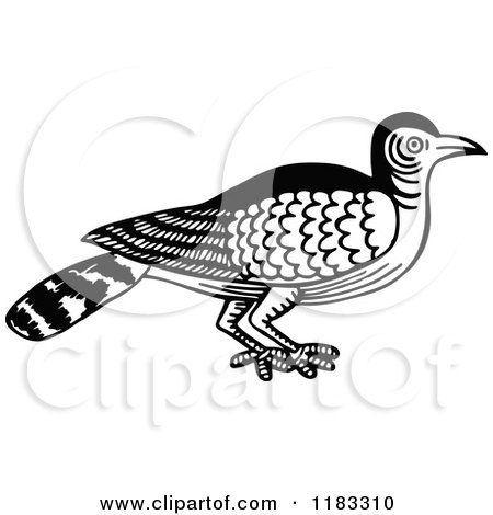 Clipart of a Black and White Nightingale Bird - Royalty Free Vector Illustration by Prawny