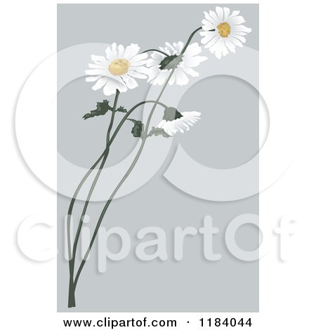 Clipart of Daisy Flowers over Gray - Royalty Free Vector Illustration by dero