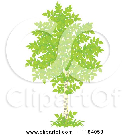 Cartoon of a Birch Tree with Green Foliage - Royalty Free Vector Clipart by Alex Bannykh