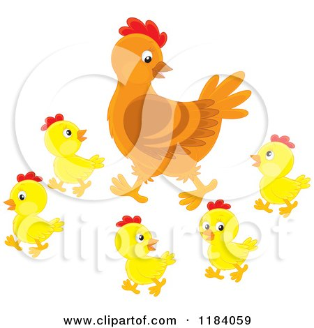 Mother Hen and Baby Chicks Posters, Art Prints