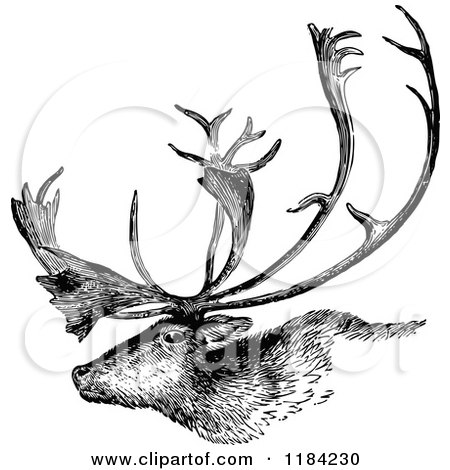 Deer illustration black and white - photo#52