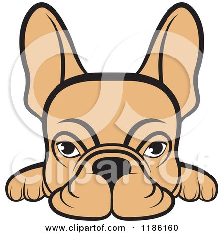 Clipart of a Fawn Frenchie Dog Looking over a Surface - Royalty Free Vector Illustration by Lal Perera