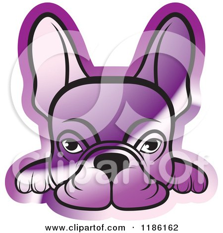 Reflective Purple Frenchie Dog Looking over a Surface Posters, Art Prints