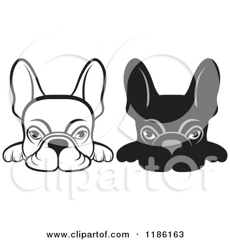 Clipart of Black and White Frenchie Dogs Looking over a Surface - Royalty Free Vector Illustration by Lal Perera