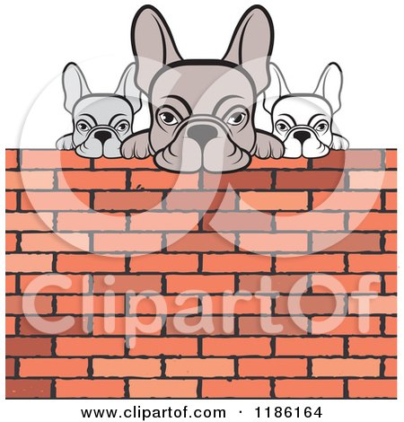 Clipart of Three Frenchie Bulldogs Looking over a Brick Wall - Royalty Free Vector Illustration by Lal Perera