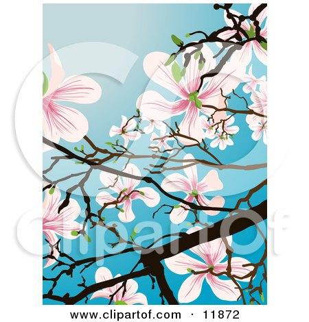 Flowering Magnolia Tree Posters, Art Prints