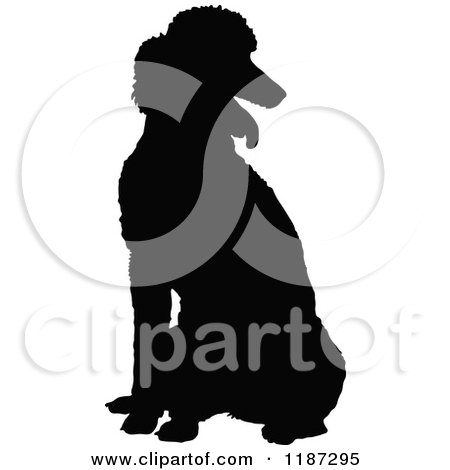 Poodle Head Silhouette Black silhouette of a poodle