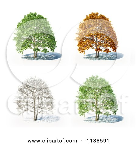 Clipart of a 3d Tree in Different Seasons, on White - Royalty Free CGI Illustration by Mopic