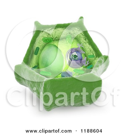 Clipart of a 3d Plant Cell Model - Royalty Free CGI Illustration by Mopic