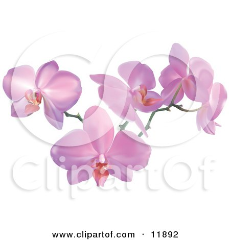 Stem of Pink Orchid Flowers Clipart Illustration by AtStockIllustration